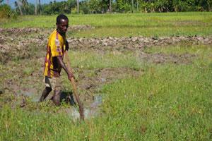 Fednor preparing his rice fields Credit:Worms/Caritas
