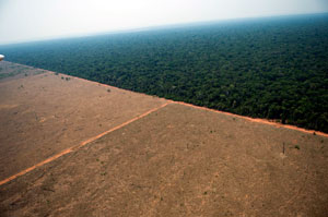 Fifty percent of Brazil's emissions derive from deforestation and forest and savannah fires. No other country is losing forest on the same scale as Brazil, which accounts for one in every two trees felled in the world. Credits: Carlos García Paret/La Amazonia Brasileña.