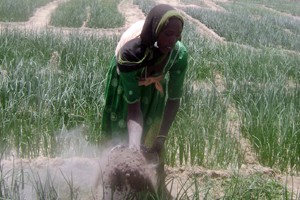 Women do the farming in Chad and put food on the family table. Credits: Adoum Goulgué/SECADEV