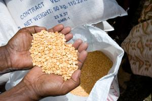 Workers hired by CRS partner agency the Hararghe Catholic Secretariat (HCS) inspect bags of split peas provided by USAID before a CRS-supported distribution as part of the ongoing Productive Safety Net Program in the town of Chelenko. The program targets more than 302,000 vulnerable people with food to fill recurring food gaps across much of the region. Credits: David Snyder/CRS