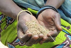 Le vent tourne à Kreghané, au Tchad