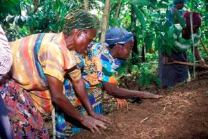 Poder ver bosques con árboles en Uganda