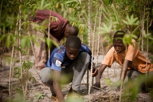 Clearing the cassava fields with their bare hands. Photo by Matthieu Alexandre for Caritas Internationalis