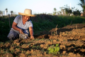 Caritas has supplied tools and seeds in the Visayas to help farmers recover. Credit: Jen Hardy/CRS