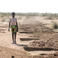 A local youth walks by a series of holes known as micro basis that are part of a CI-supported water project in Ethiopia's arid Jijiga Zone. Photo by David Snyder/Caritas