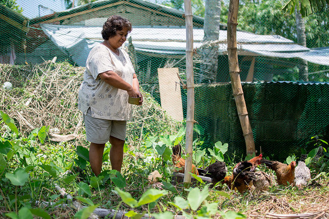 Anita Advincula, Palo, beneficiary of CRS livelihoods programme bought 16 chickens, as well as setting up a vegetable garden.  Photo by Lukasz Cholewiak/Caritas