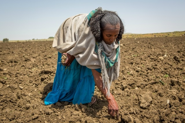 Herit is a subsistence farmer who has raised five children on her own in the village of Arato. Caritas is providing her with cash transfers that enable her to feed her family.