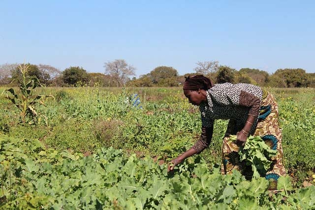 Women farmers face many challenges.