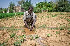 Darfur voices: Farming hands