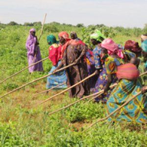 The women's committee of Hadj al-Dérib in Chad