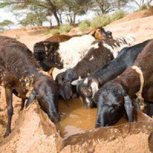 Semillas de esperanza tras la sequía en África oriental