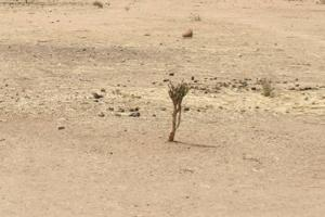 Half the land in India is now desertified