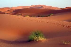 Desertification in Algeria Credits: Wikicommons