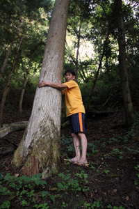 During the tsunami, Sakuma Kaname held on to this tree to survive, floating in water eight metres above the ground. Credits: Sheahen/Caritas