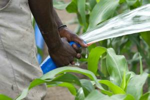 The switch from food to bio-fuel crops risks food security in developing countries Credits: CRS/Snyder