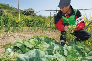 Caritas Japan through Sendai Diocese Support Center provides assistance to agriculture of local residents. Credits: Caritas Japan