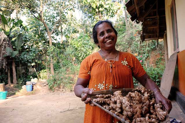 In tribal villages in the area of Wayanad in the Indian state of Kerala, Caritas programmes linked impoverished families with government programmes, introduced organic farming methods, and helped them earn a living. Photo by Caritas