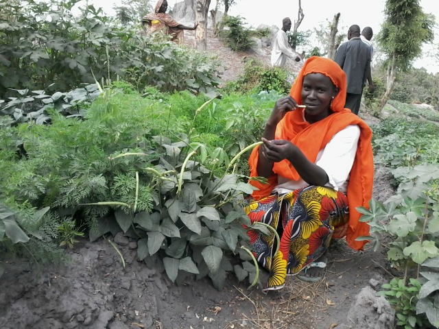 Caritas helps people fleeing to Chad from regional conflict become self-sustaining farmers. Photo by Caritas Chad.