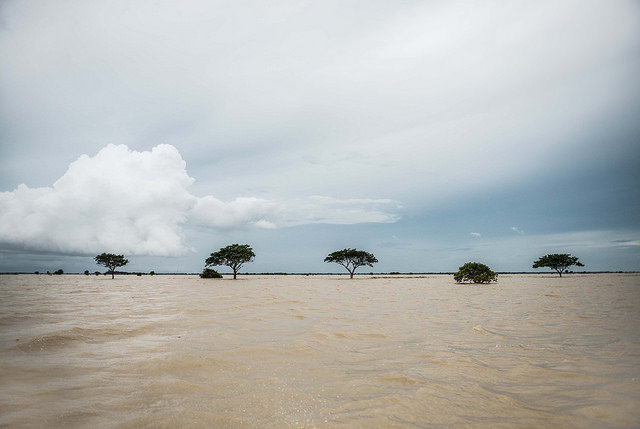 Flooded rice fields in Pathein state in Myanmar. Photo by Caritas