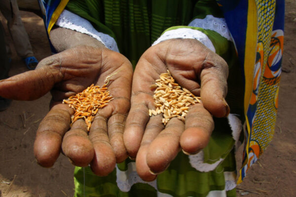Food security and integral human development