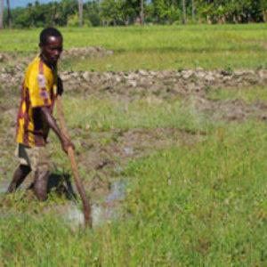 Étancher la soif des rizières dans le Sud d'Haïti.