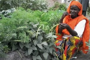 Gardens of safety in Chad from Africa's wars