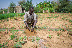 Darfur voices: Farming hands