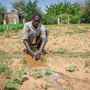 Voces de Darfur: Manos sembradoras