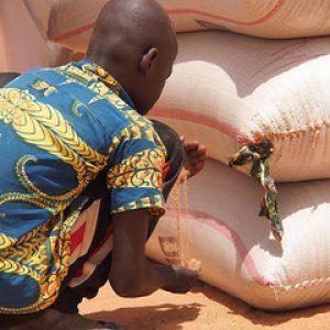 La faim pourrait doubler au Niger sans une intervention de secours