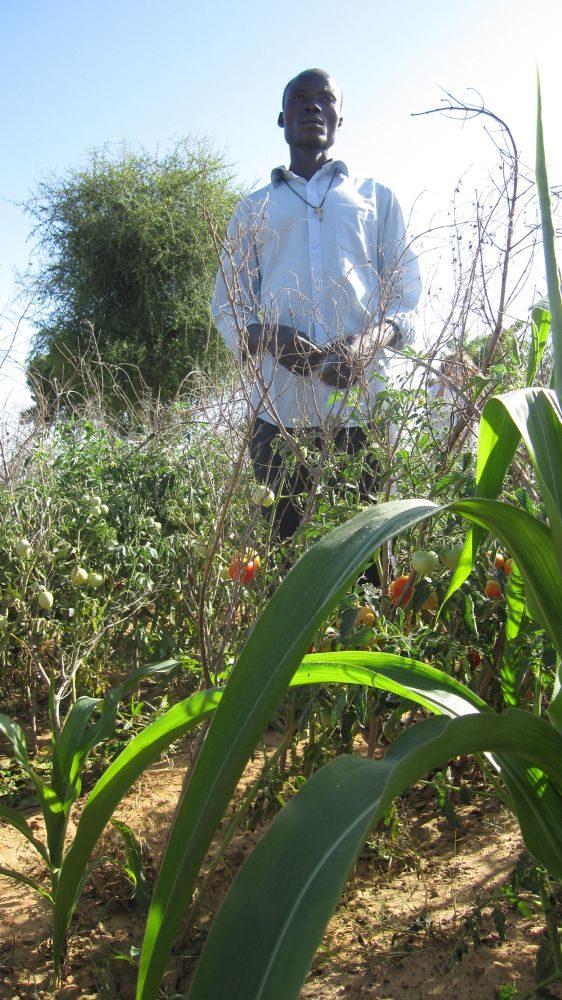 Harvest time in Burkina Faso