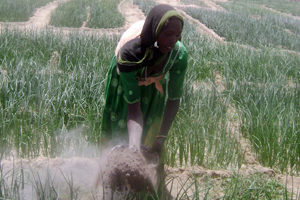 Un jardín en el desierto en el Chad