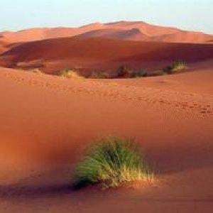 Cambio climático en Argelia