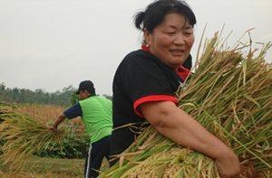 Promoviendo los derechos de los agricultores en Asia
