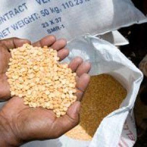 Preguntas y respuestas sobre la crisis alimentaria en el Cuerno de África