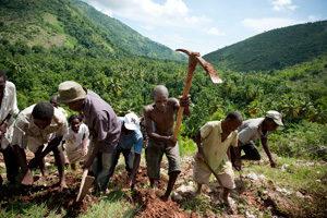 Livelihoods – Helping farmers in Haiti