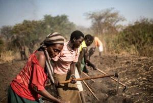 Caritas responde a la crisis de alimentos en África oriental