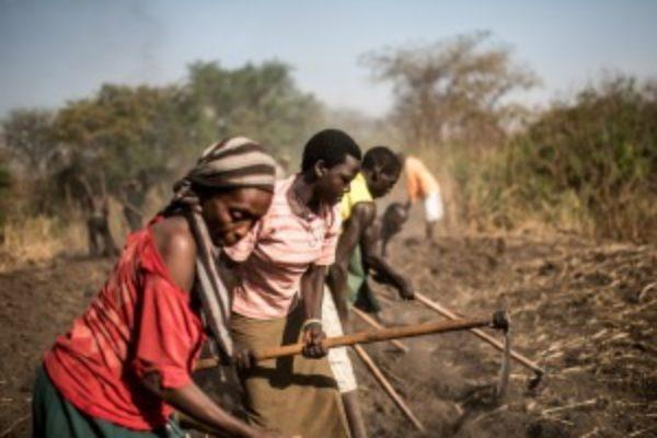 Caritas responds to East Africa food crisis