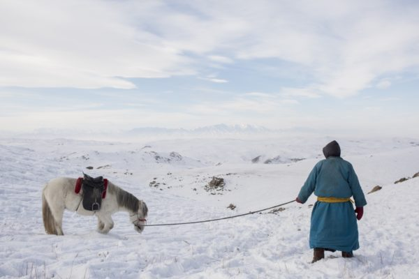 Dzud in Mongolia