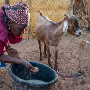 West Africa food crisis threatens 6 million people