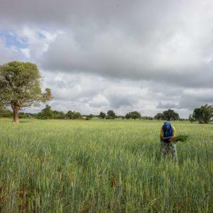 Vatican convenes ecological  leadership summit